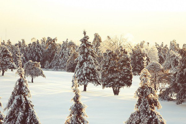 nature-snow-trees-2414-small
